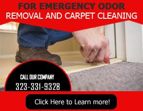 Blog | Important Facts about Carpet Cleaning